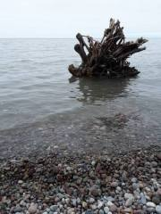 driftwood in the lake