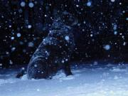 Samantha enjoying the snowfall