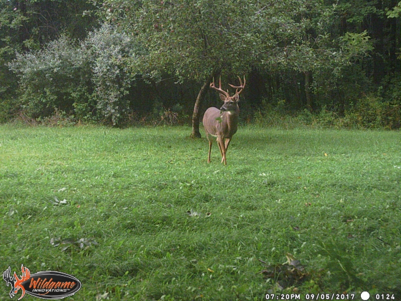 9-pt Buck in South Bristol