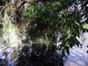 Keuka Lake reflections