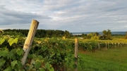 Seneca Lake Vineyard