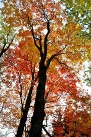 Ontario County Park - Early November