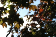 Falls leaves in morning sun