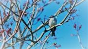 Sparrow during springtime
