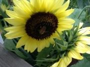 Summer is buzzing bye