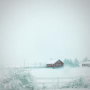 Barn in a Snowstorm
