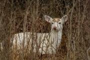 Seneca White Deer Tour