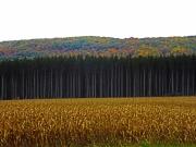 Wayland Fall Foliage