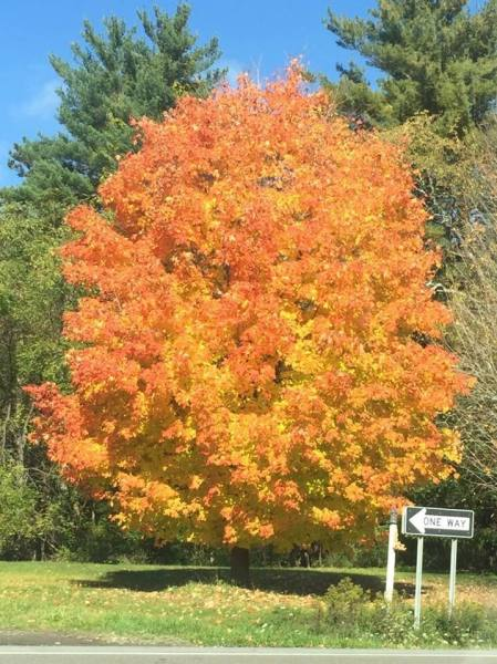 Fall Foliage in Newfield