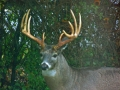 Henrietta buck