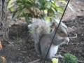 Furry Garden Buddy