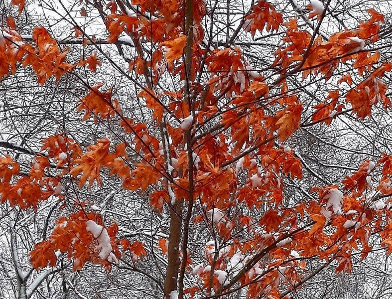 Late Fall in January