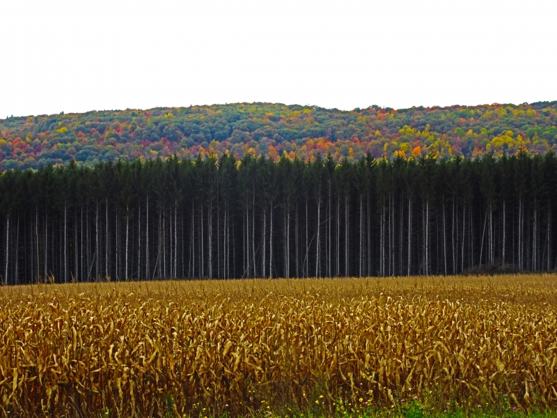 Wayland Fall Foliage