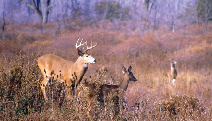 Whitetail Deer In New York Life In The Finger Lakes