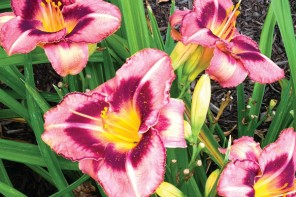 Top 10 Perennials for the Finger Lakes
