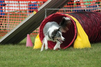 2015_septoct_cultured_dogshow