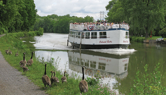 Wistful or wary? A family of geese stare at the tour boat Colonial Belle as it heads from Fairport to Pittsford.