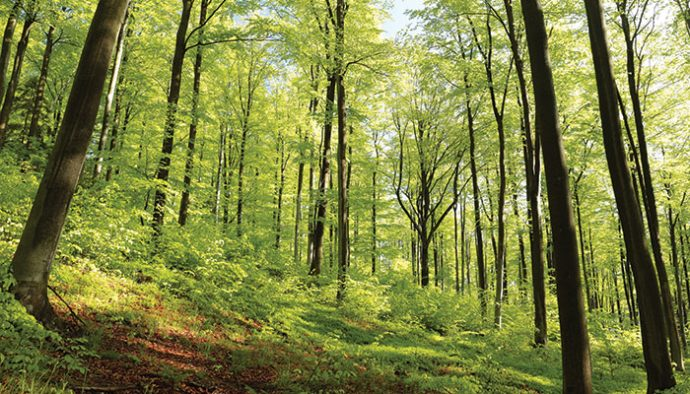 The Eastern Deciduous Forest - Life in the Finger Lakes