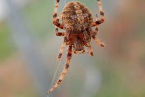 Arachnid Lifestyles