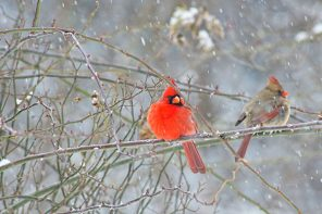 The 2017 Great Backyard Bird Count is Feb. 17-20