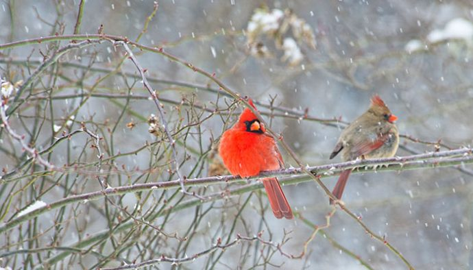 The 2017 Great Backyard Bird Count is Feb. 17-20 - Life in ...