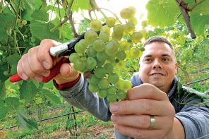 The Viticulture and Wine Technology Program