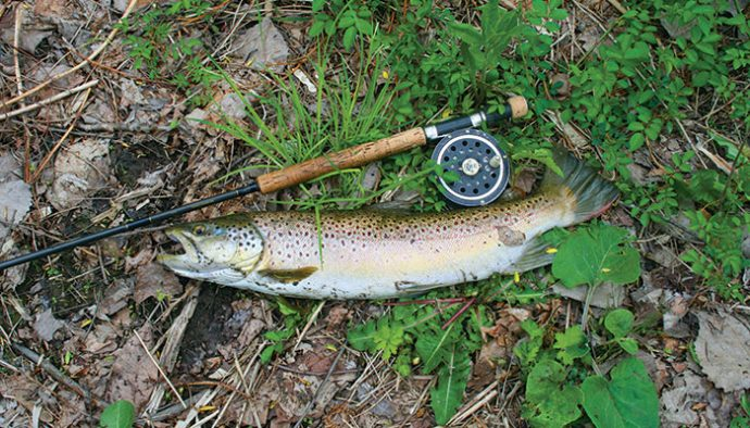 1980862fa9b A brown trout caught (and released) in Grout Brook. Photo by J. Michael  Kelly
