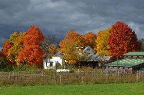 Open House and Apple Festival at the Folk Art Guild