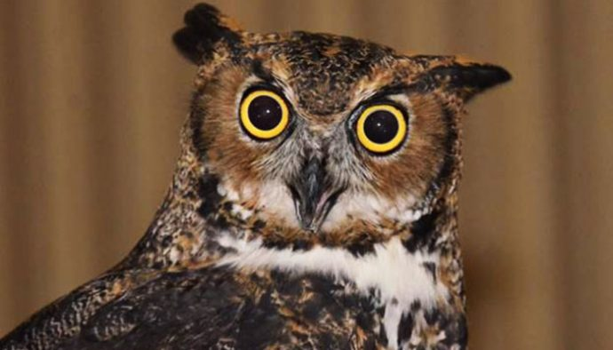 happy owlween features owls and a night hike life in