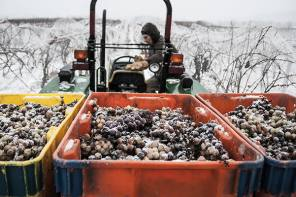 Hunt Country Ice Wine awarded prestigious Jefferson Cup