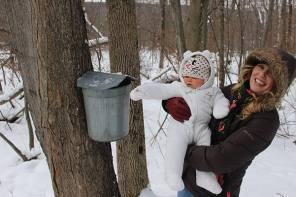 Celebrate New York State's Maple Weekend