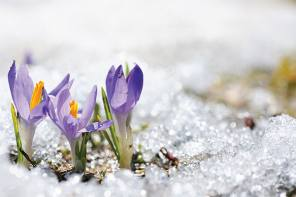 First Signs of Spring