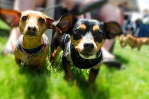 Finger Lakes Winery's Rescue Dogs to Host Woofstock