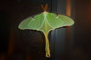 Magnificent Moths of Upstate New York