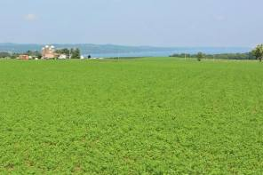 Gorham Farmland Now Protected