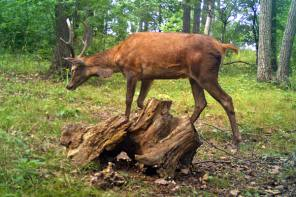 The Tale of the Mysterious Deer