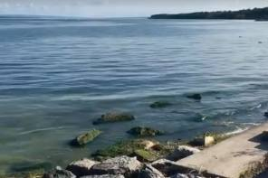 Bloom Watch Update on Seneca Lake
