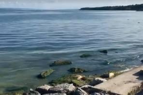 Bloom Watch Update on Seneca Lake