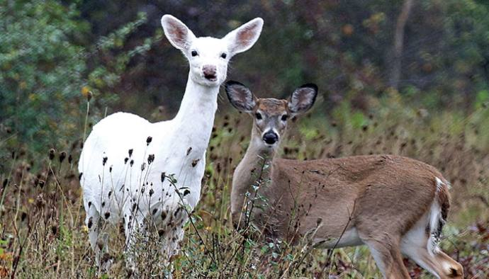 Seneca White Deer turns down aid offer, ensuring closure at end of month