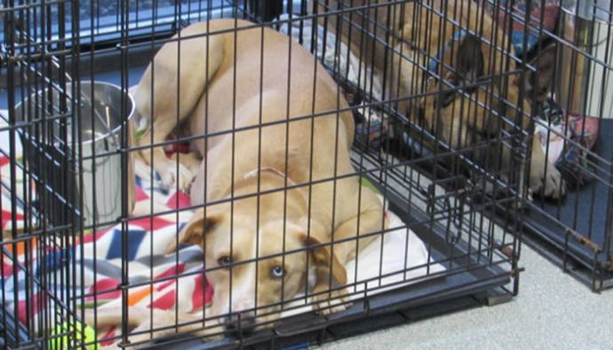 Help a Hound this Holiday - Life in the Finger Lakes