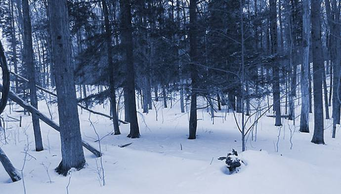 The wonder of a snowy evening