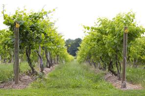 Cayuga Lake Wine Trail Teams up with Local Charity