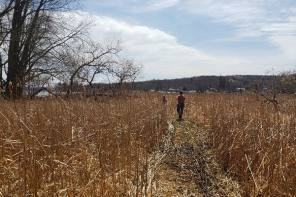 Finger Lakes Museum to Plant Trees and Build Trails