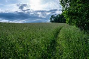 Land Donation Secures Scenic Stretch of Finger Lakes Trail