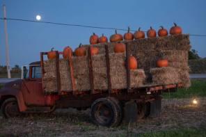 Pumpkin Patch Power