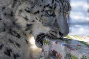 Zoo animals to receive holiday treats on Sunday, December 15