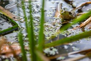 Onondaga Lake Conservation Corps Hosts Reptile and Amphibian Lecture At The MOST