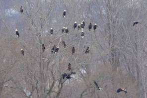 Onondaga Lake Conservation Corps Accepting Images For Photography Exhibit