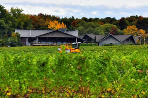 Wagner Vineyards Rings in New Year Following Historic 2019