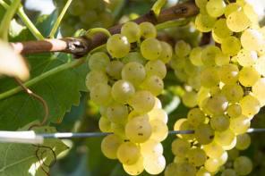 Hunt Country Vineyards Wins Award
